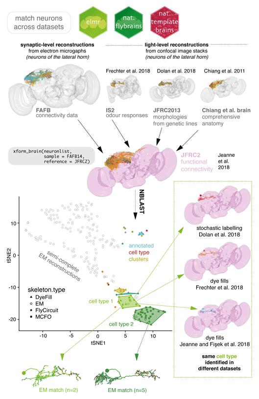 08_Match neurons across datasets